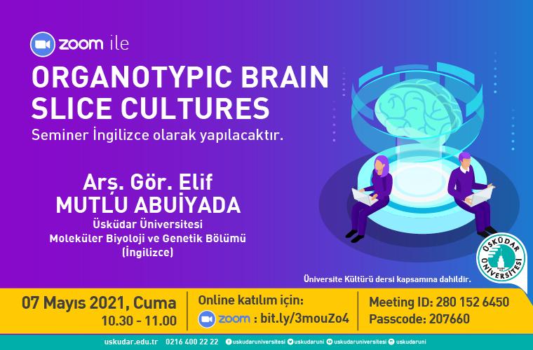 Organotypic Brain Slice Cultures